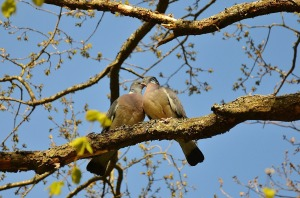 empty nest bird pair